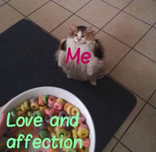 cat memes loop time loop cat funny memes wholesome love and affection wholesome cats wholesome posts positivity positive thinking cute