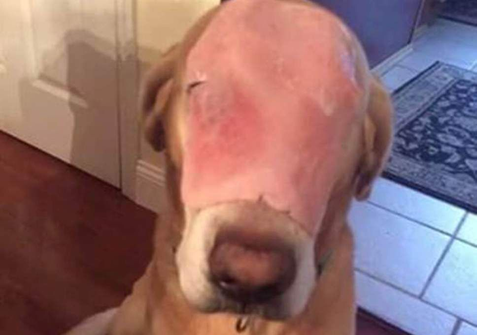 Dog with ham on its face tricks people on into praying for burns recovery