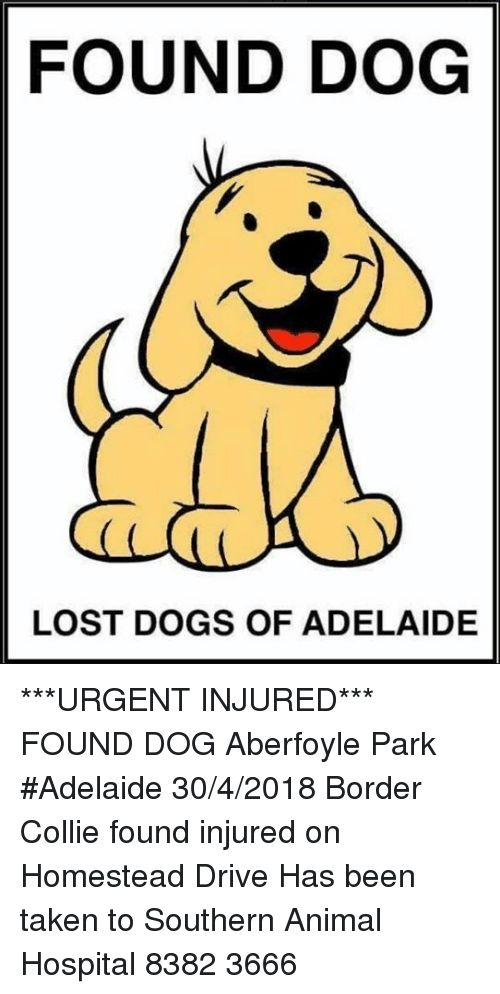 Dogs Memes and Taken FOUND DOG LOST DOGS OF ADELAIDE
