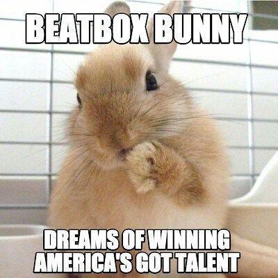 rabbit cuteanimal bunnies bunny pet AGT