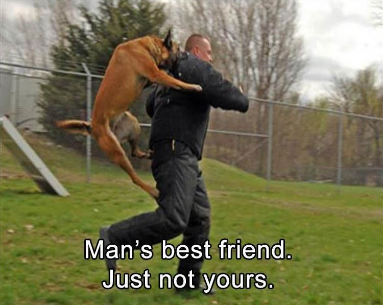 Man s best friend just not yours