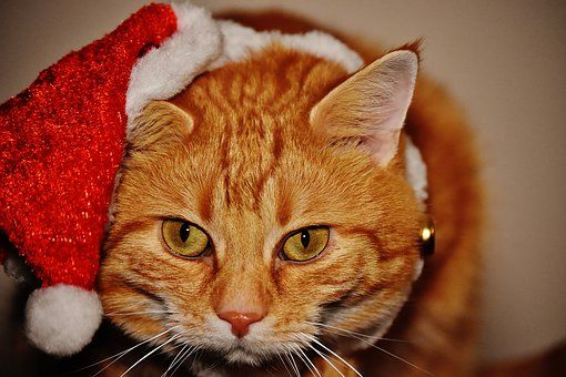 Cat Red Christmas Santa Hat Funny