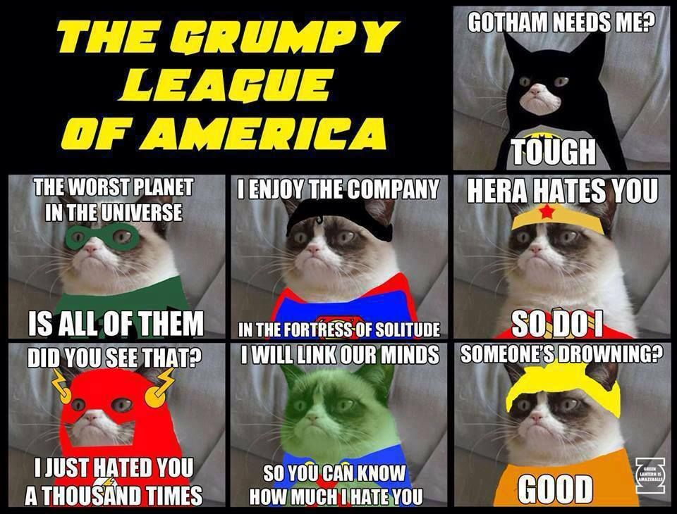 Posted on September 6 2013 Categories Cat Funny Cat LolcatsTags america cat meme cat picture drowning fortress of solitude grumpy