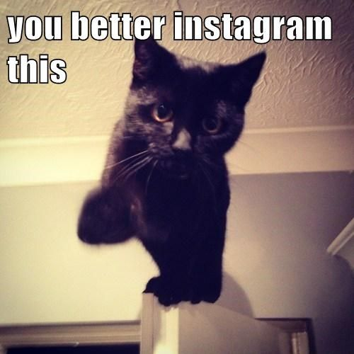 Catch the Inspirational Funny Cat Memes Instagram