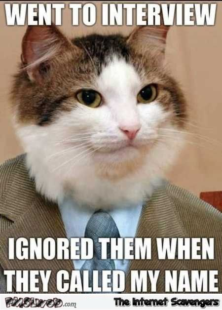 Cat goes to an interview funny meme