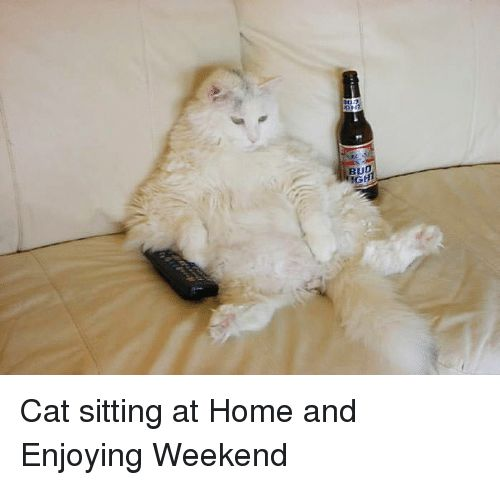 Catch the Inspirational Funny Cat Weekend Pictures