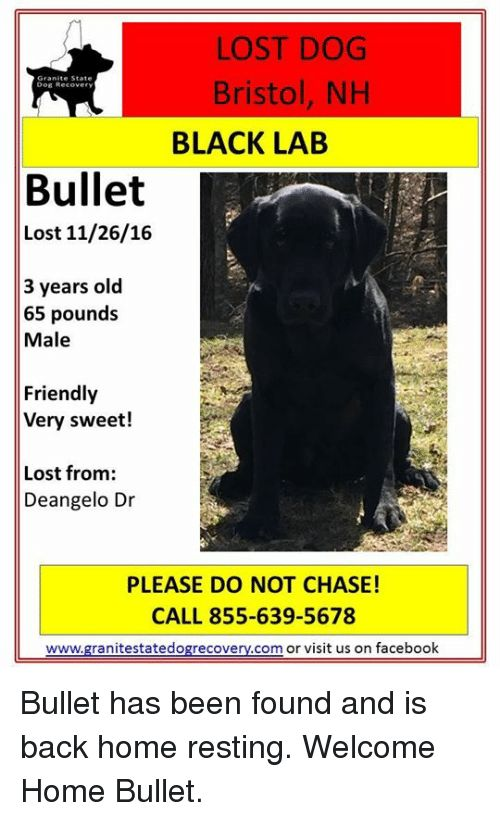 Memes Chase and Bristol LOST DOG Granite State Bristol NH Dog Recovery