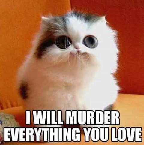 Thank you weird kitty