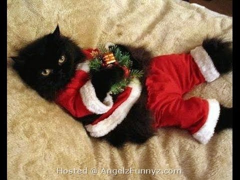 Thing s Animals about Christmas Funny Cats and Dogs Videos Christmas