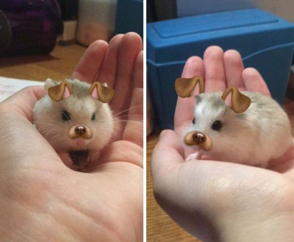 2 My Friend Put Snapchat Filters Her Hamster