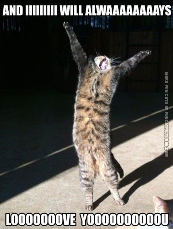 funny cat pics i will always love you singing