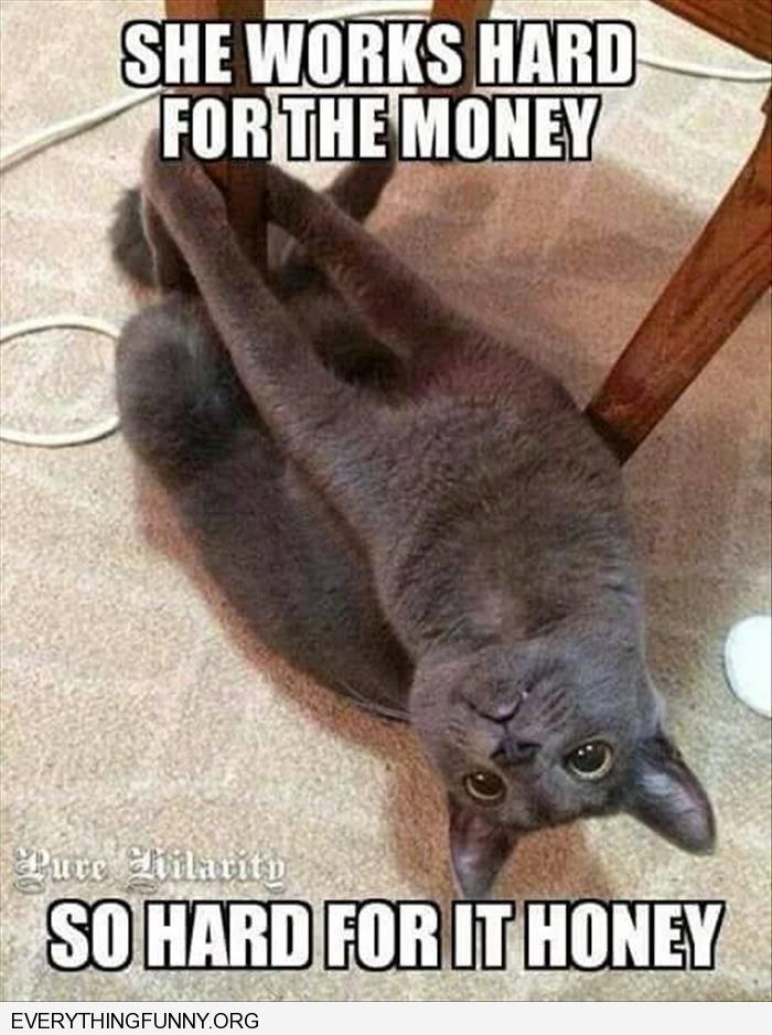 funny cat picture on pole she works hard for the money