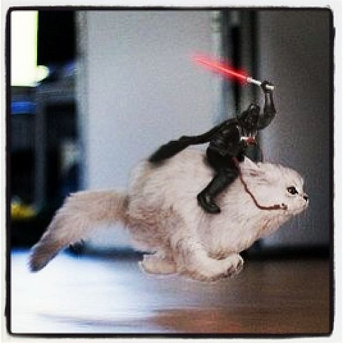 Catch the Lovely Funny Darth Vader Cat Pictures