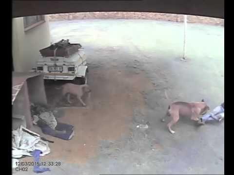 Dog s intruder Middelburg