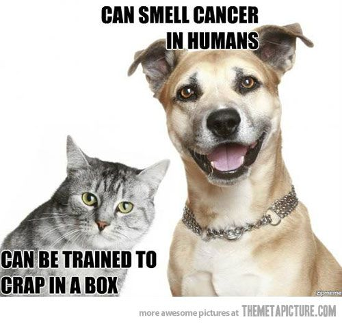 Catch the Lovely Funny Reasons Dog are Better Than Cat Memes