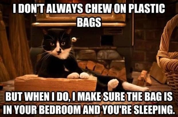 50 Funny Cat Memes By CatTime