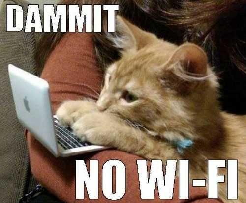 cat memes grumpy cat memes funny cat memes cute cat memes