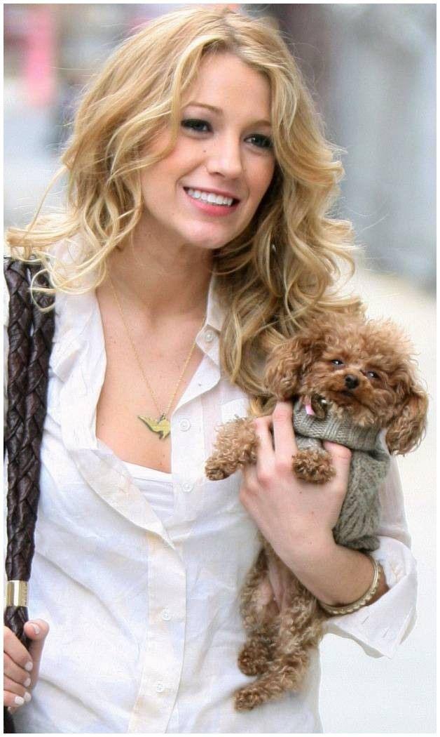 "Dog Hairstyles Blake Lively Wallpaper by Terezska318 0d Free Zedge¢""¢ Dog"
