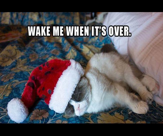 32 2012 s Best of Grumpy Cat Christmas
