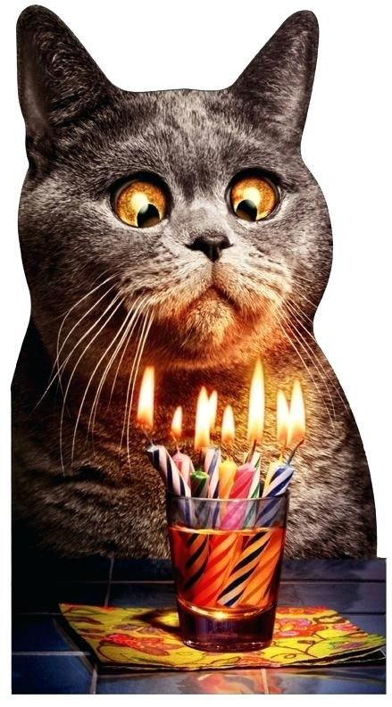 Catch the Luxury Funny Cat Free Birthday Pictures