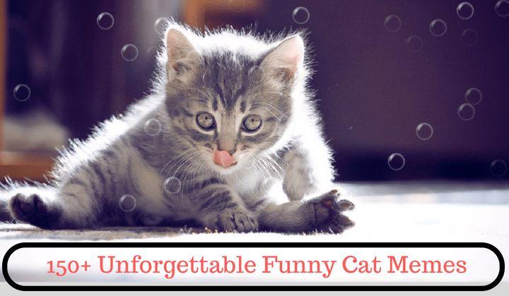 150 Unfor table Funny Cat Memes 2019 – Memespic