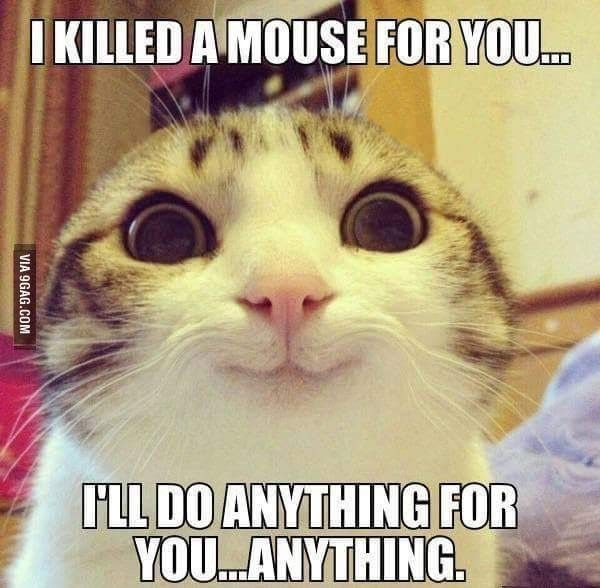 I Killed A Mouse