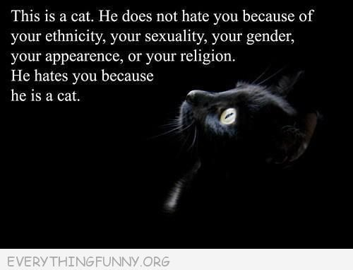 funny cat pictures cats hate you because they are cats