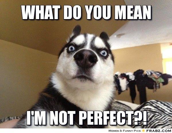 Catch the Luxury Funny Crazy Dog Mom Birthday Memes