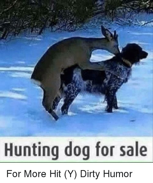 Memes 🤖 and Dirty Humor Hunting dog for sale For More Hit