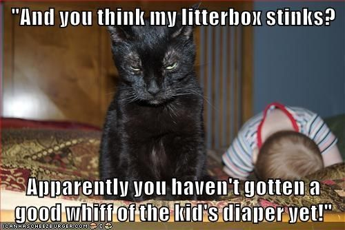 animals Babies captions litter box Cats funny