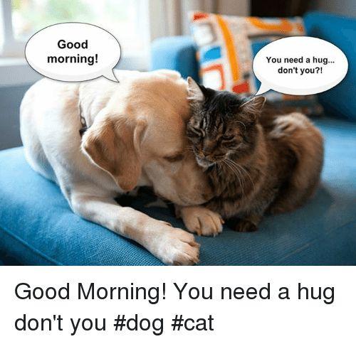 Dogs Memes and Good Morning Good morning You need a hug