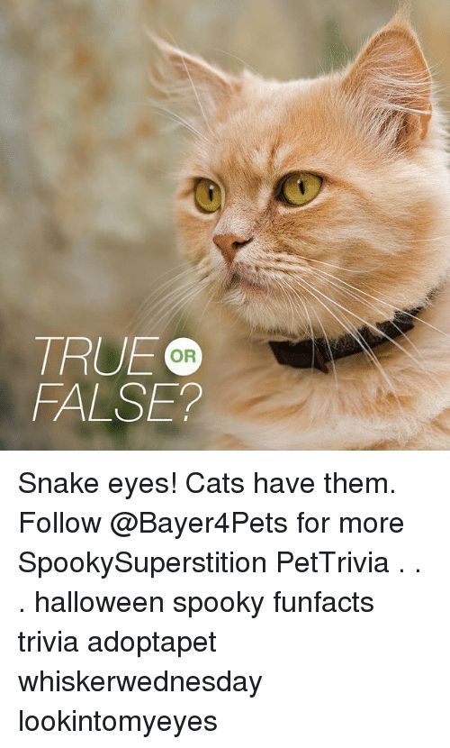 Cats Halloween and Memes TRUE OD FALSE Snake eyes Cats have