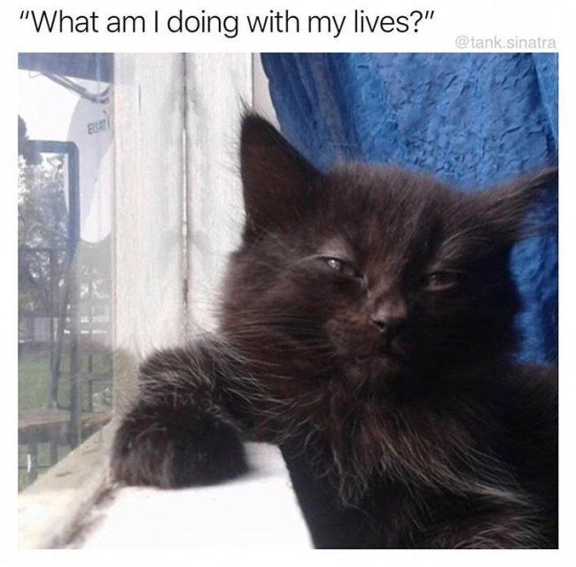 Catch the Marvelous Funny Cats and Dogs Memes
