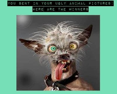 Ugly animal contest so funny pinterest animals blog 400x320 Ugly animal memes