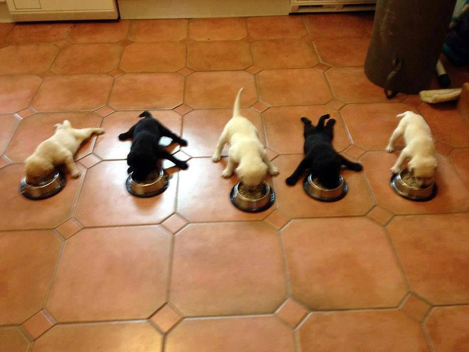 Puppy Feeding Schedule Everything You Need to Know