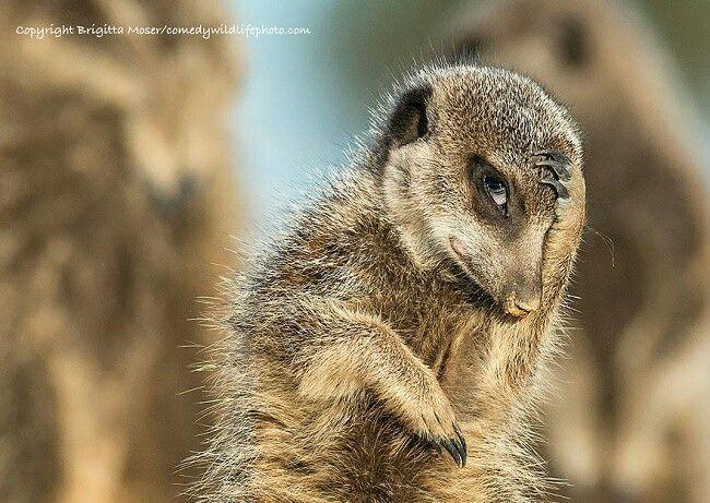Explore Wild Animals Nature Animals and more