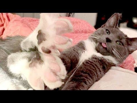 SUPER FUNNY and EXTREMELY CUTE CATS and DOGS Funny & cute CAT and DOG pilation