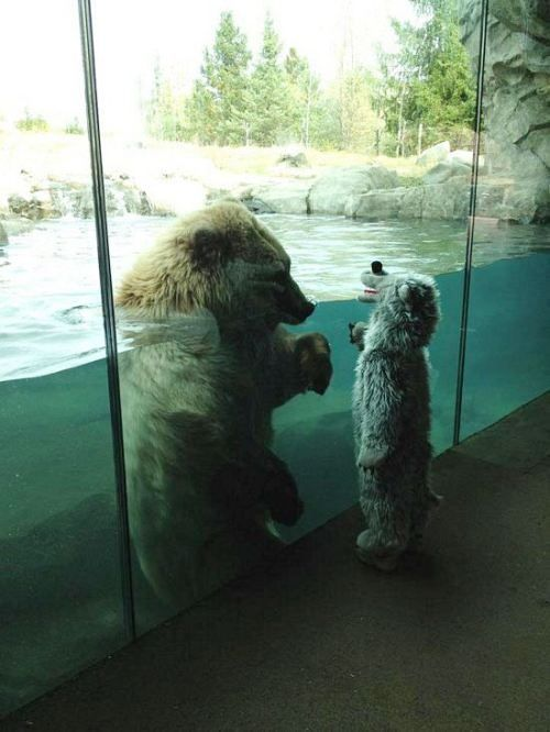 Polar Bears 3 Bears Baby Bears Funny Cute Freaking