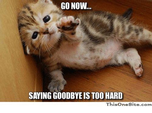 Image result for cat goodbye meme