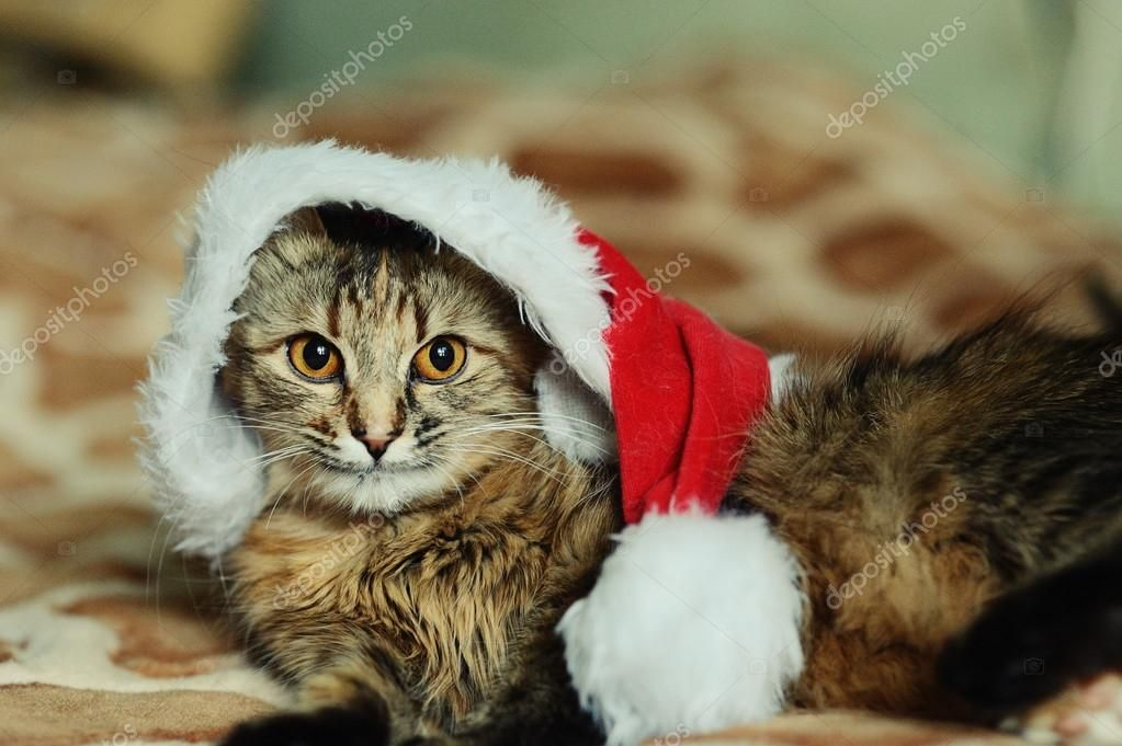 Catch the New Funny Cat Santa Pictures