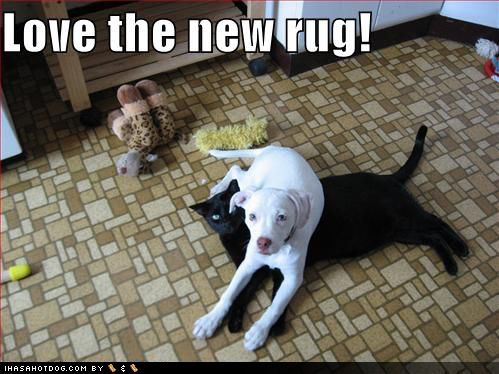 funny dog pictures new black cat rug