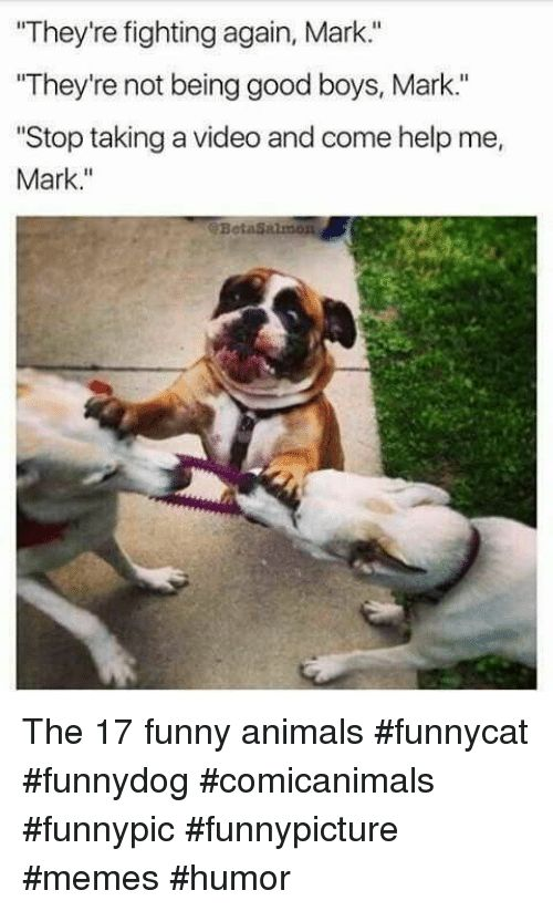 Animals Funny and Funny Animals They re fighting again Mark