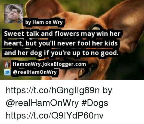 Dogs Memes and Flowers by Ham on Wry Sweet talk and flowers may