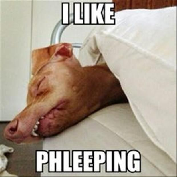 Tuna Phteven Is The Funniest Dog The Internet – 20 Pics