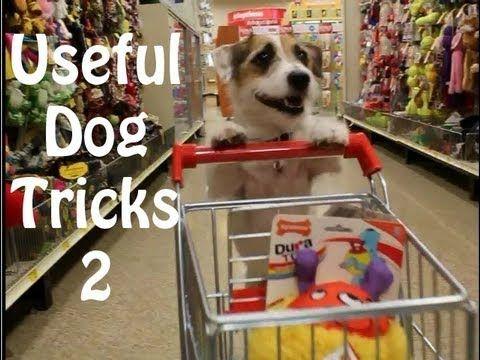 usefuldogtricks smartdog amazingdogtricks