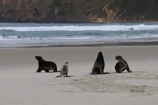 Dunedin City Wildlife and Scenery Tour