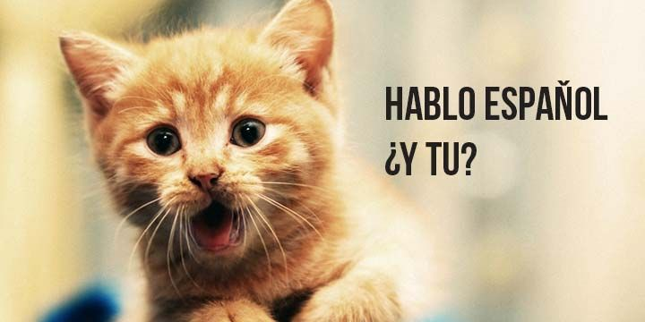You Can Haz Spanish