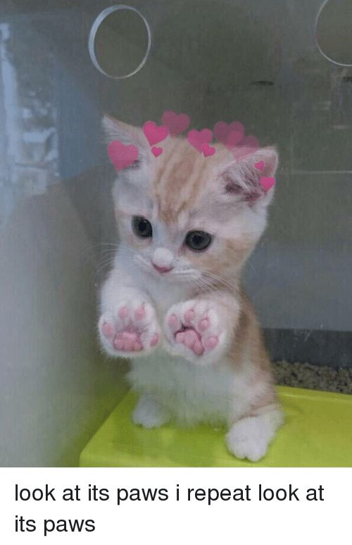 Cats Cute and Funny look at its paws i repeat look at its