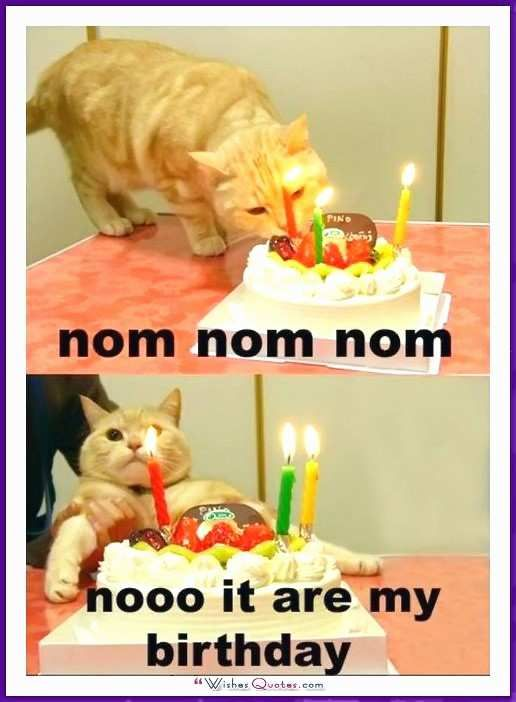 Crazy Cat Lady Birthday Meme Pretty Happy Birthday Memes with Funny Cats Dogs and Cute Animals