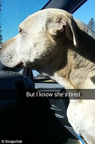 The female pet owner wrote that she knows her dog is tired in explaining
